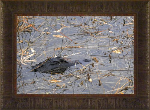 Camouflaged By Todd Thunstedt 17.5x23.5 Wildlife American Alligator Framed Art Print Wall Décor (Submerged American Alligator)