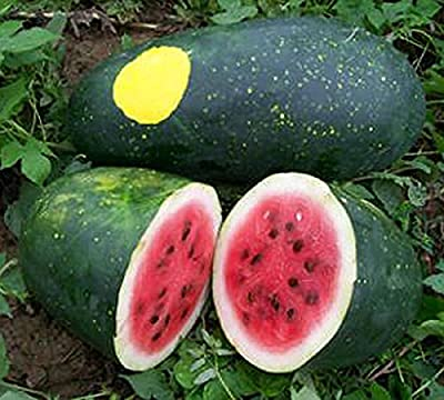 MOON & STARS Heirloom Watermelon Seeds