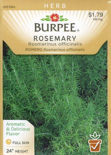 Burpee 61383 Herb Rosemary Seed - Herbs Burpee