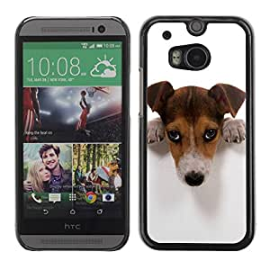 Caucho caso de Shell duro de la cubierta de accesorios de protección BY RAYDREAMMM - HTC One M8 - Cute Guilty Doge