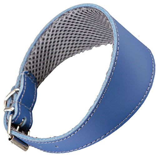 Collar de cuero Arppe Azul para Galgo