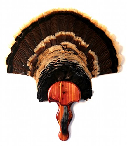 "Turkey Fan & Beard Plaque ""The Gobbler"" - Aromatic Cedar ..."
