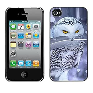 Design for Girls Plastic Cover Case FOR iPhone 4 / 4S Cute Owl Snow Winter Ferocious Feather OBBA