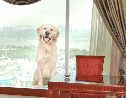 Window Sticker Golden Retriever window film window tattoo glass sticker window art window décor window decoration window picture Dimensions: 109.8 x 48 inches by PPS. Imaging