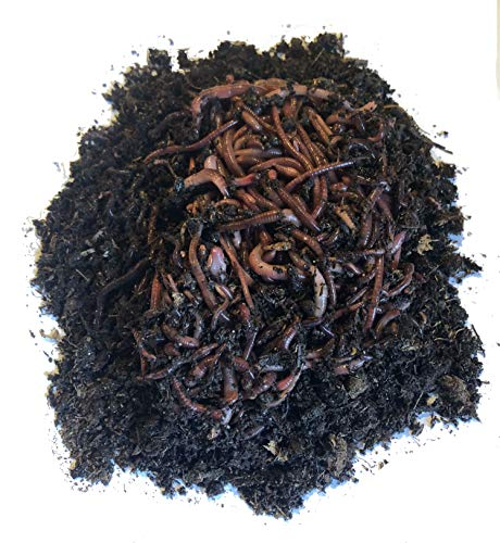Nature's Little Recyclers 1,000+ Red Worms, Red Wigglers, Compost Earthworms, Organic, Sustainably Raised ()