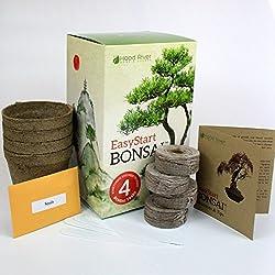 EasyStart Bonsai Kit - Everything Needed to Grow 4 Beautiful Bonsai Trees