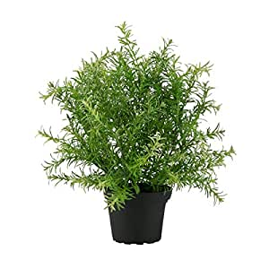 Asparagus Artificial Potted Plant