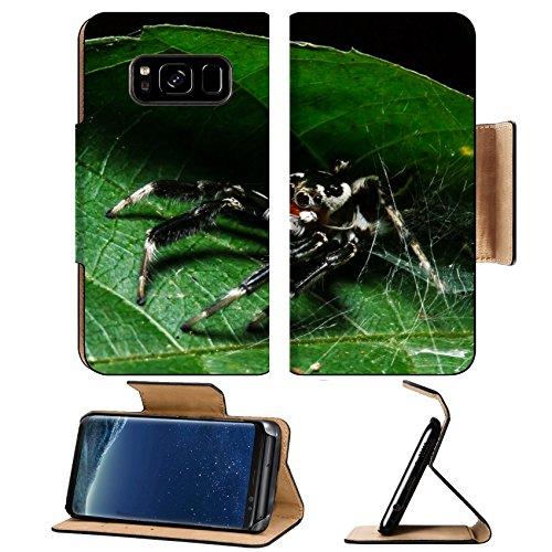 Liili Premium Samsung Galaxy S8 Flip Pu Leather Wallet Case IMAGE ID 32424706 Jumping spider on leaf
