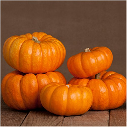 Package of 50 Seeds, Jack Be Little Miniature Pumpkin (Cucurbita pepo) Non-GMO Seeds by Seed Needs