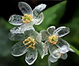 25x Crystal skeleton flower seeds flower seeds garden rare seed plant garden rarity fresh novelty # 39