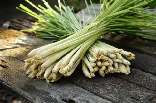 Thai Lemongrass (Cymbopogon flexuosus) Herbal Plant Heirloom Seeds, Exotic Culinary Herb