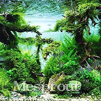 Aquarium Grass Seeds Family Water Plant Easy to Grow Plants Plants Plants Seeds 500 Particles lot 4b128f