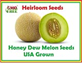 buy Honey Dew Green Melon, Heirloom Melon Seeds, Fruit Seeds 105 seeds. Honey Dew Melon Seeds now, new 2018-2017 bestseller, review and Photo, best price $7.95
