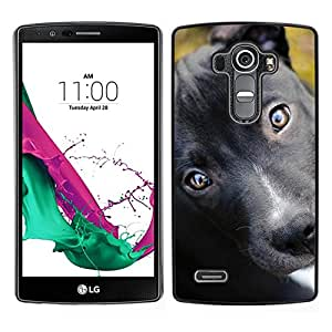 // PHONE CASE GIFT // Duro Estuche protector PC Cáscara Plástico Carcasa Funda Hard Protective Case for LG G4 / Pit Bull Terrier Puppy Black Eyes Dog /