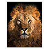 Africa Wild Lion Awesome Creature Printed Velvet Plush Fleece Feeling Super Soft Cozy Bedroom/Couch/Sofa Throw Blanket 58x80 inch(Large) (Two Sides Printed)