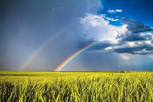 Kansas Photography Wall Art Print - Picture of Double Rainbow Over Spring Wheat Field in Northwest Kansas Country Decor 5x7 to 40x60