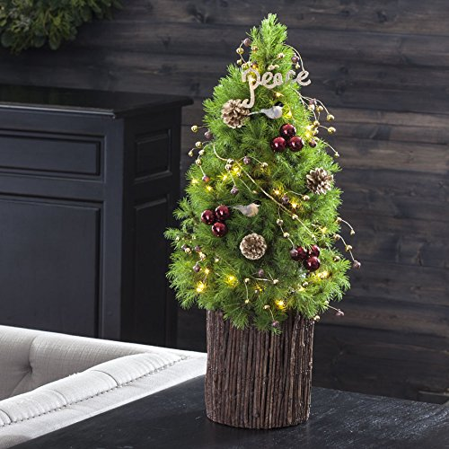 Live Christmas Trees - Jackson & Perkins Peace on Earth Christmas Tree - Live Potted Miniature Alberta Spruce Tree