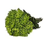 Farm Fresh Natural Green Spider Mums - 60 Stems