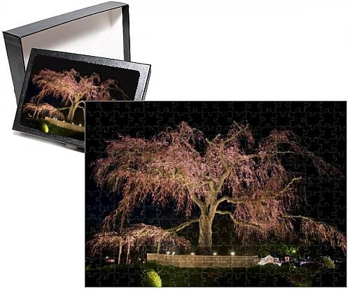 Photo Jigsaw Puzzle of Famous giant weeping cherry tree