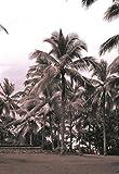 Coconut Grove, Serai , 36x24in. (paper)