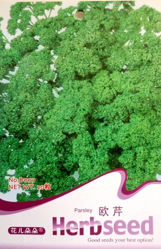 Parsley Seed 20 Rare Herb Petroselinum Seeds Edible Green Natural Flavoring D007 By Mikedaoer