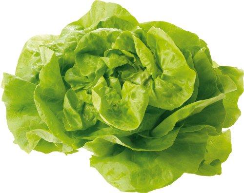 Obst Gemüse Bio Salat Kopfsalat Rot Grün Samenfest 2 X 1 Stk