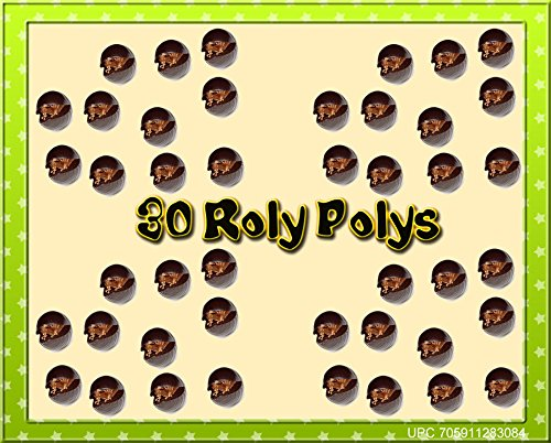 Insectsales.com 30 Live Roly Polys - Educational & Fun! Pocket Pet for The Roly Poly Playground