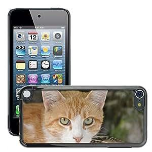Etui Housse Coque de Protection Cover Rigide pour // M00113724 Gato Animales Marrón // Apple ipod Touch 5 5G 5th