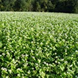 Outsidepride Buckwheat Cover Crop Seed - 10 LB