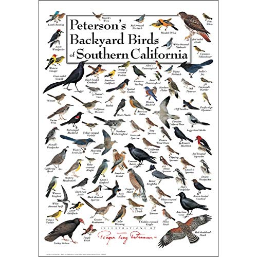Bird Large Poster - Earth Sky & Water Poster - Peterson's Backyard Birds of Southern California
