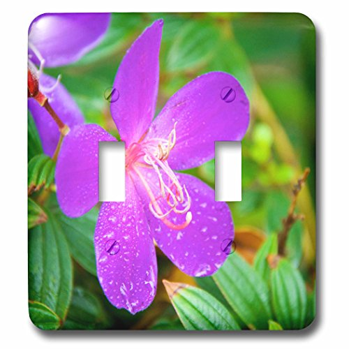 Tibouchina Urvilleana Princess Flower (Danita Delimont - Flowers - Sai Kung A Princess flower or Glory Bush. - Light Switch Covers - double toggle switch (lsp_225586_2))