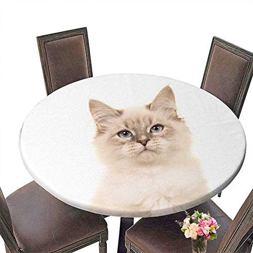 Birman Strap - PINAFORE Round Premium Tablecloth Portrait of a Birman Kitten cat with Blue Eyes on a White Stain Resistant 47.5