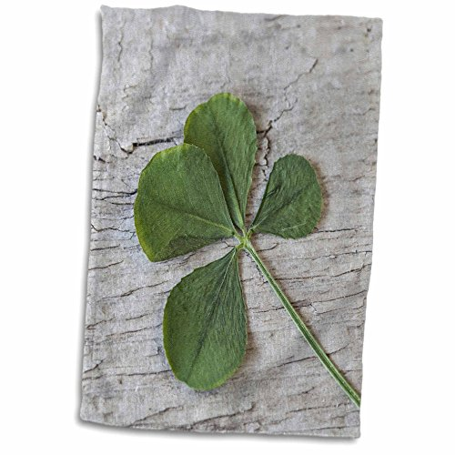 3dRose Andrea Haase Nature Photography - Dried Four Leaf Clover Close Up - 15x22 Hand Towel (twl_274772_1)