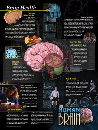 El cerebro humano Póster Series - Juego de 5 Póster laminado. Brain ...