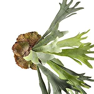 Factory Direct Craft Artificial Green Staghorn Fern for Floral and Home Decor 103