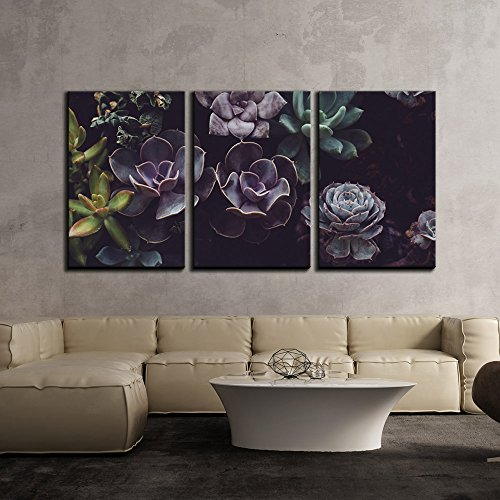 wall26 - 3 Piece Canvas Wall Art - Groups of Succulent Plant - Modern Home Decor Stretched and Framed Ready to Hang - 16
