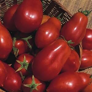 Tomato - San Marzano Red Plum - 50 Seeds