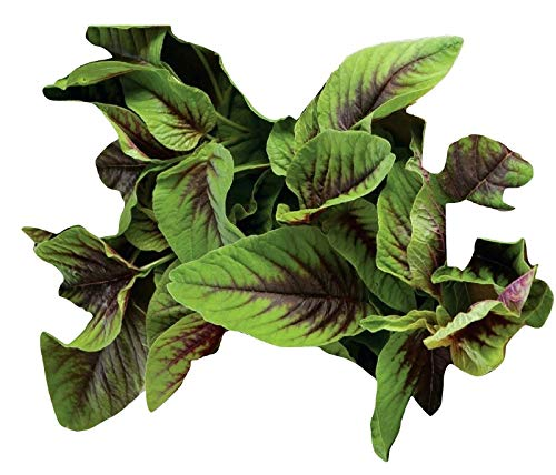 (Amaranth Seeds - Red Green Leaf - Edible Healthy Open Pollinated - 2,000 Seeds )