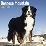 Bernese Mountain Dog, 2018 wall Calendars