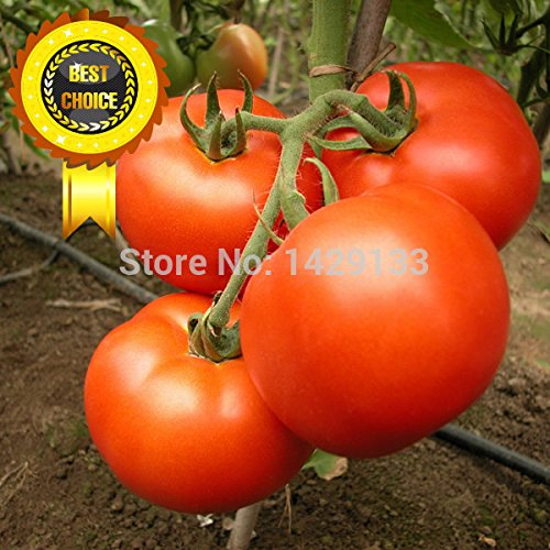 Promotion!!! 400pcs Red pear tomatoes vegetable seeds for DIY home garden Vegetable Beefsteak Tomato seeds Semillas de Tomate (Pear Plants Tomato)