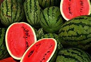 200 Seeds Jubilee Watermelon Seeds new seeds for 2017 Non-GMO Heirloom