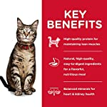 Hills-Science-Diet-Wet-Cat-Food-Adult-Minced-Savory-Recipe-Variety-Pack-5oz-Cans-12-Pack