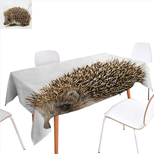Spiked Arrows (familytaste Hedgehog Washable Tablecloth Small Cute Mammal with Spiked Hair on Its Back and Sides Wildlife Photography Waterproof Tablecloths 70
