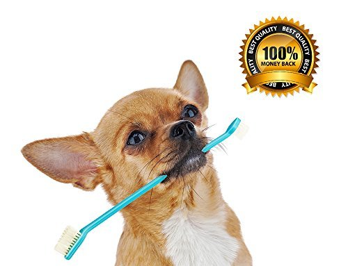 Dog Toothbrush Set with Two Dual Double Headed Toothbrushes By Legacy Pet Supplies