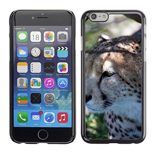 "Bild Hart Handy Schwarz Schutz Case Cover Schale Etui // M00135416 Cheetah Wildkatze afrikanischen Spots // Apple iPhone 6 PLUS 5.5"""