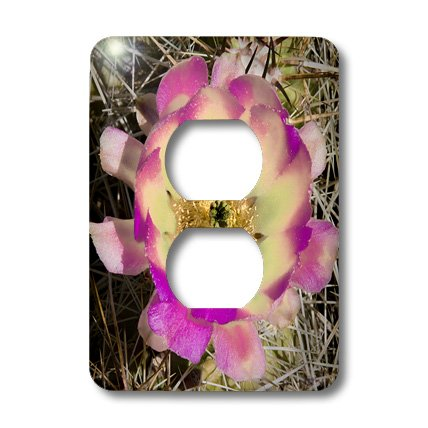 3dRose lsp_32398_6 Two Plug Outlet Cover with Decorative Colorful Garden and Southwest Desert Cactus Cartoon by 3dRose