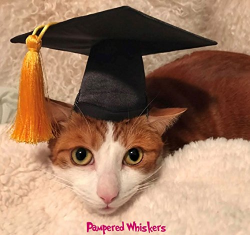 Pampered Whiskers The Graduate - Black Graduation Cap for Dogs and Cats (Small 6-11