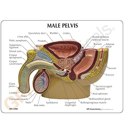 próstata agrandada 6x tamaño normal