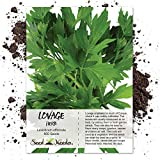 500 Seeds, Lovage Herb (Levisticum officinale) Seeds by Seed Needs