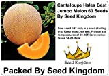 Cantaloupe Hales Best Jumbo Melon Great Heirloom Vegetable 60 Seeds By Seed Kingdom